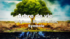 Arbre de vie : Origines, Signification, Symboles